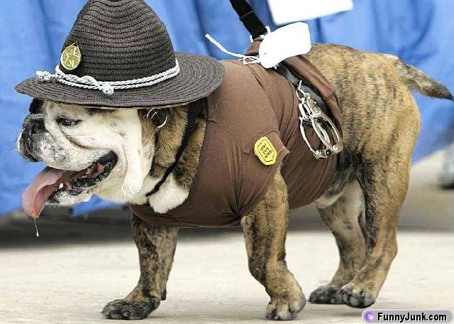 bulldogcop.jpg