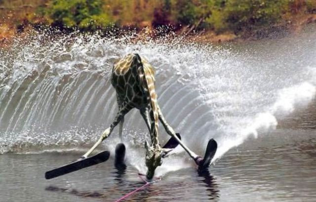 giraffeski.jpg